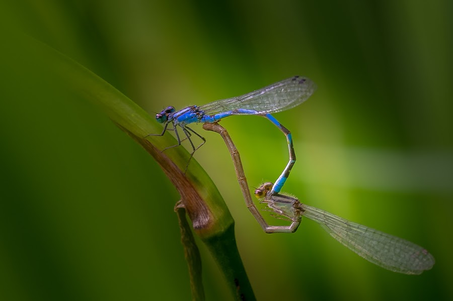 season of love by Nguyen Thevan - Animals Insects & Spiders