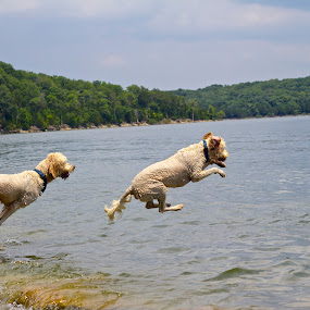 Jump Sequence 2 by Ross Bolen - Animals - Dogs Playing