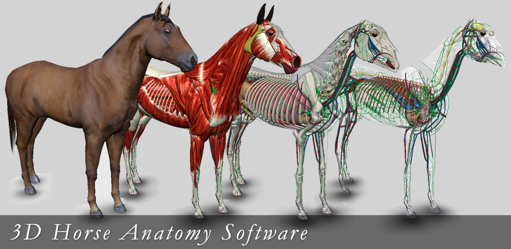 Download 3D Horse Anatomy Software APK latest version app for ...
