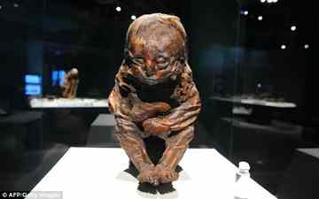 World's biggest mummy exhibition opens in California