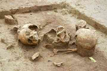 Human skulls found in Herxheim: The remains indicate that most of the dead were in good health before they died.