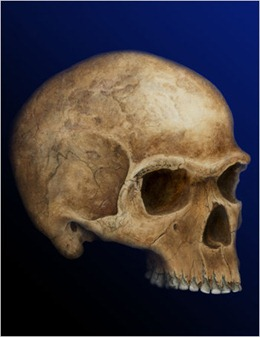 A rendering of an early modern human skull discovered in 1952 near Hofmeyr, South Africa.