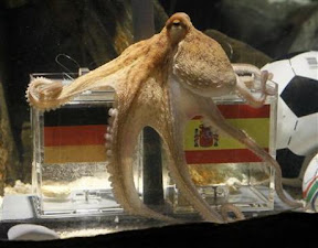 paul-the-octopus-final-germans-wanting-to-eat-and-spaniards-wanting-to-protect-him