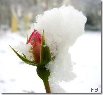 Garten im Winter © H. Brune