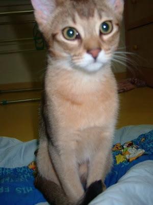 불만있는 고양이 바토 [고양이,고양이키우기,고양이집사,반려묘,cat]