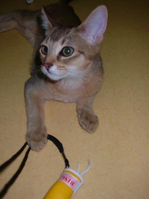 만족한 고양이 바토 [고양이,고양이키우기,고양이집사,반려묘,cat]