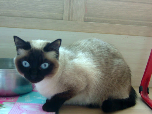 고양이 잔디 [고양이,고양이키우기,고양이집사,반려묘,cat]