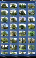 Screenshot of Boom Id - Bomen van Europa