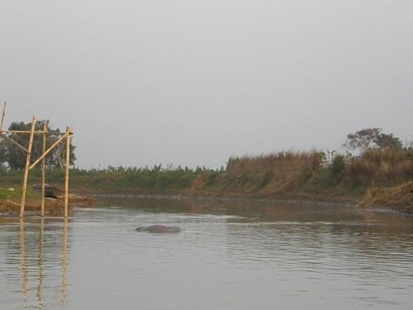 Obiective turistice India: delfin sarind.JPG