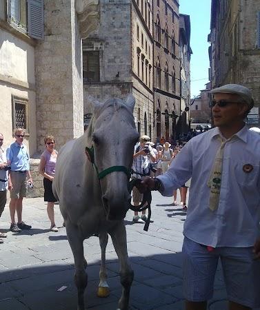 Imagini Italia: FEDORA, IAPA CASTIGATOARE 2 IULIE 2010, A DOUA ZI IN 3 E DUSA PRIN CENTRU.jpg