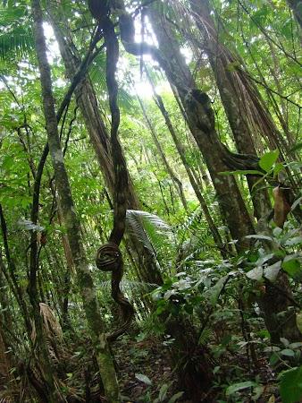 Imagini Venezuela: Padurea tropicala - Henri Pittier.JPG