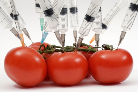 Getting the needle. The needles of hypodermic syringes pushed into tomatoes.