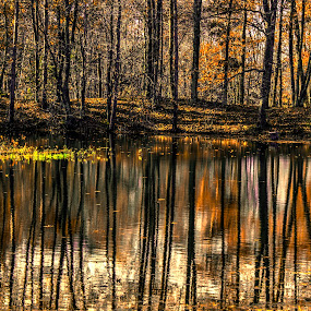 Fall reflections by Marilyn Magnuson - Nature Up Close Water ( water, tree trunks and leaves reflections, fall, shoreline, reflections )