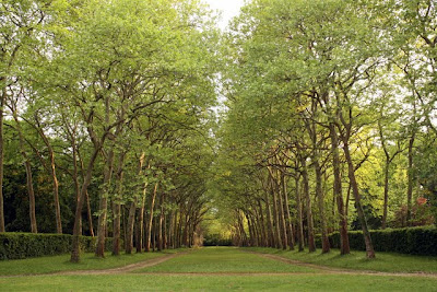 Allee at Chateau St Julien l'Ars near Poitiers France