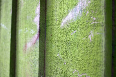 苔藓覆盖的木栅栏花园在汉普斯特德在伦敦郊区