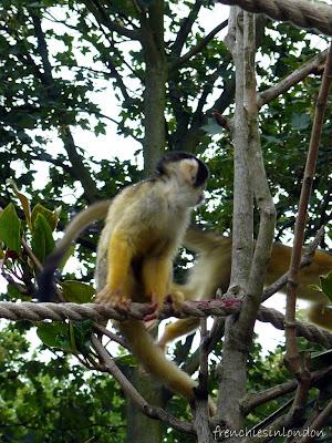 London zoo (Regent's Park) ; un moment de détente agréable à Londres 4
