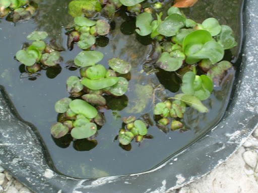 Nuevo estanque para tortugas de agua fotos temas for Estanques tortugas prefabricados