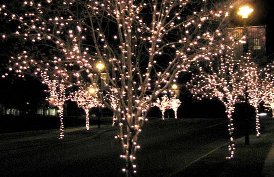 Iluminaci n vegetal urbanarbolismo for Iluminacion arboles jardin
