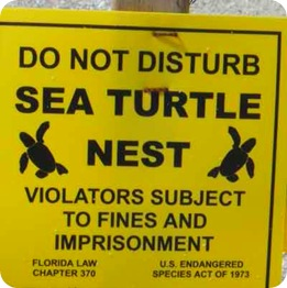sea-turtle-sign