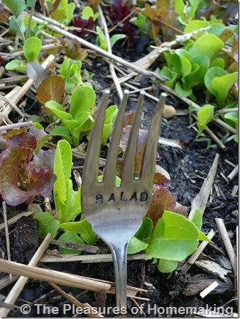 salad_thumb1