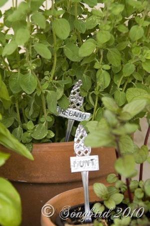 Herb Garden8