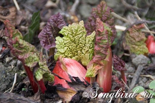 Garden Spring 4