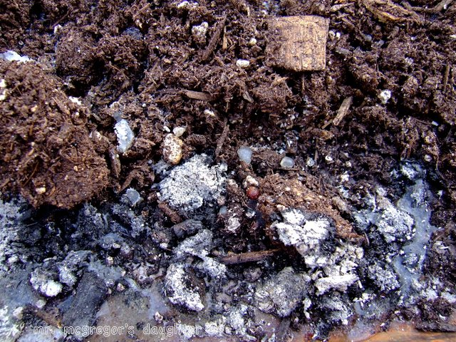 Sterilizing Potting Soil: From the DAISNAID* File
