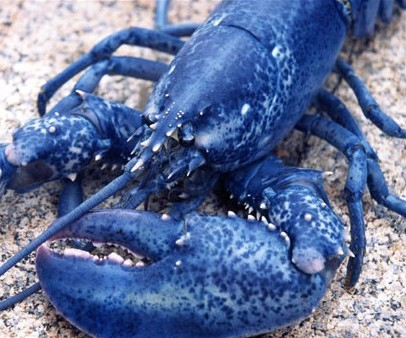 lh3.ggpht.com/_GjYWXudceas/S7eHsUPOC1I/AAAAAAAAA1c/7Oy41-1onRU/blue_animals_3a.jpg