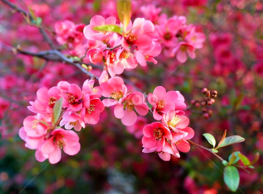 by Branka Radmanić - Flowers Tree Blossoms
