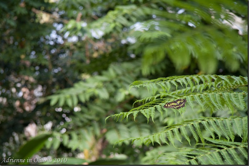 green butterfly camouflage with fern