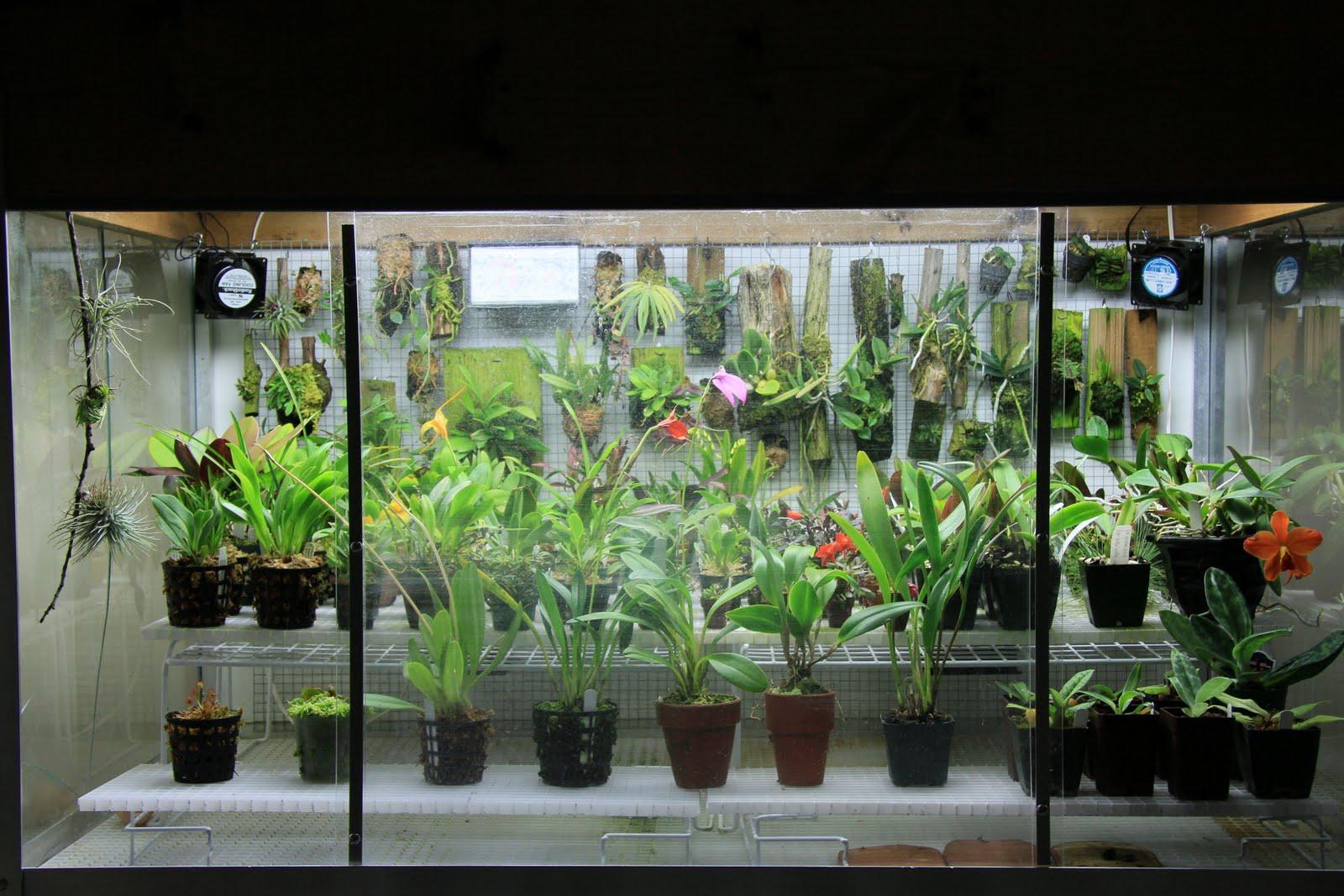 Orchids In Bloom My Orchidarium