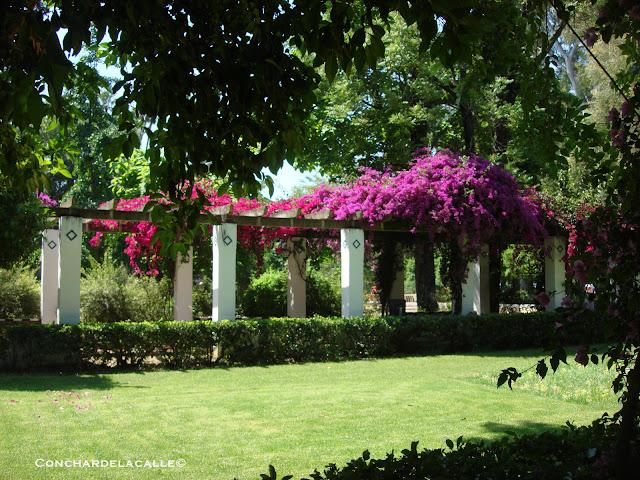 Parque de María Luisa - Mayo2011 (86).JPG