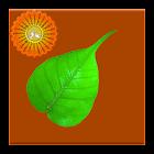 Dhamma Quotes icon