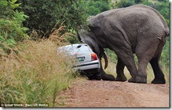 Elephant and car