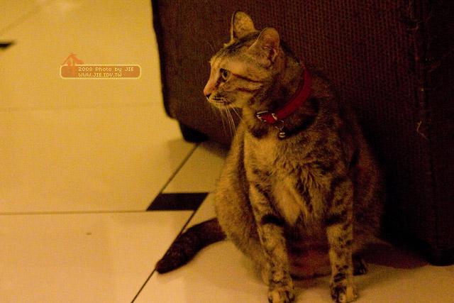 貓妝餐廳&印度彩繪