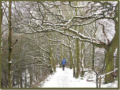 The tree lined path throughCulcheth Linear Park