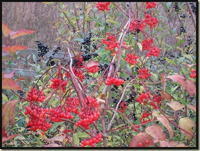 Berries beside the M60