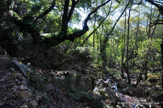 Rio Guadalmesí - Tajo de la Corza