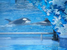 080 - Espectáculo de las orcas.JPG