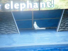 084 - Espectáculo de las orcas.JPG