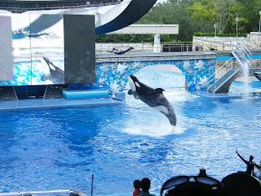 121 - Espectáculo de las orcas.JPG