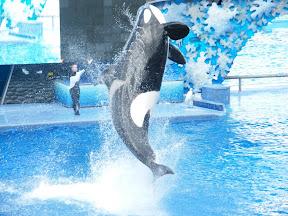 098 - Espectáculo de las orcas.JPG