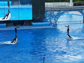 100 - Espectáculo de las orcas.JPG