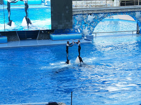 101 - Espectáculo de las orcas.JPG