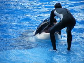 104 - Espectáculo de las orcas.JPG