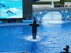 111 - Espectáculo de las orcas.JPG