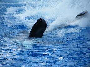 115 - Espectáculo de las orcas.JPG
