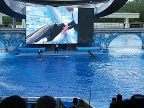 123 - Espectáculo de las orcas.JPG