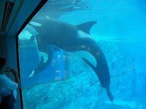129 - Orcas.JPG