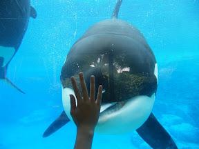 134 - Orcas.JPG